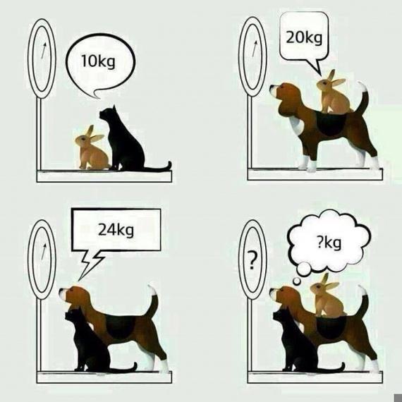 Задача про кота собаку и кролика решение